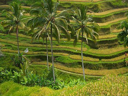 Bali : autour d'Ubud