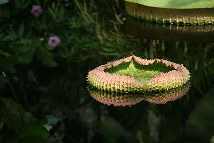 Joli coeur aux Kew Gardens