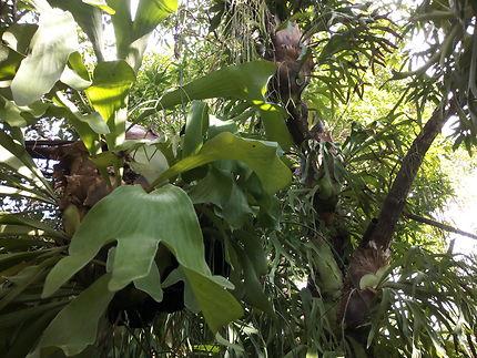 Jardin de Los Helechos, Santiago de Cuba
