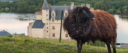 Montsoreau, plus beau village de France