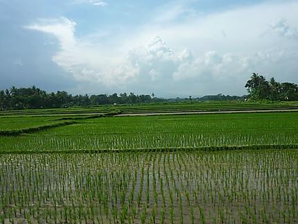La campagne autour de Jogja
