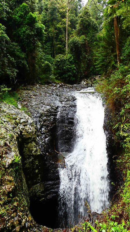 Cascade au Springbrook National Park Forest