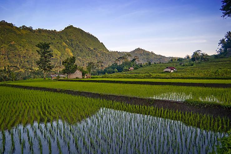 Sidemen et ses environs : Bali bucolique