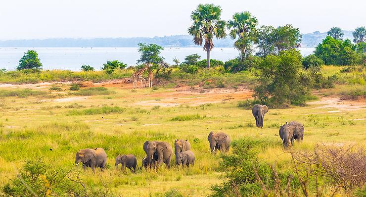 Eléphants et girafes à Murchinson Falls