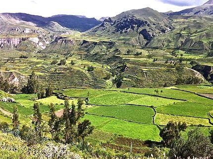En route pour le Cañon del Río Colca