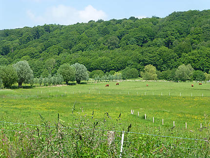 Vaches dans la vallée