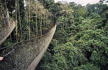 Pont de singe à Kakum forest