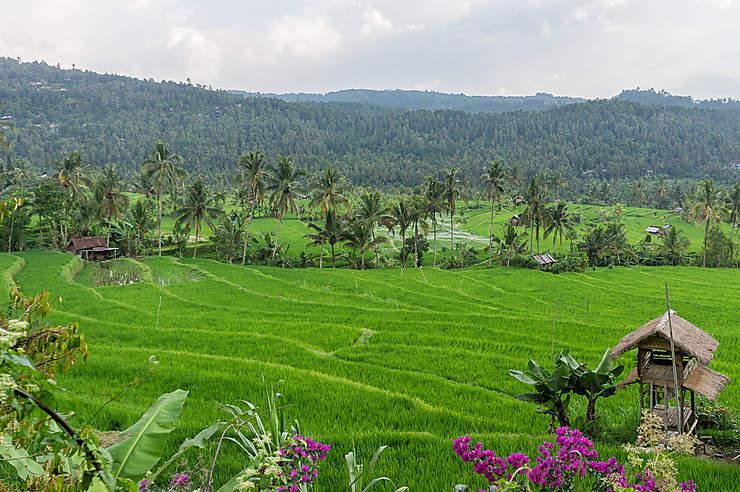 Munduk et le Nord sauvage de Bali