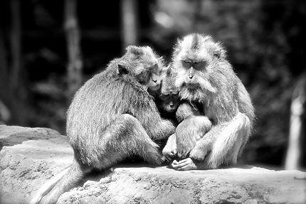 Portrait de famille de macaques crabriers