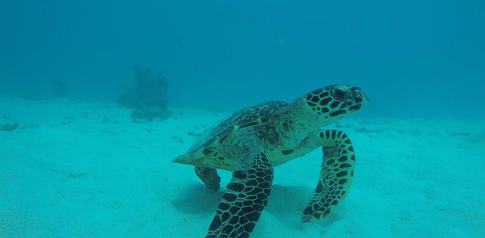 Les îles habitées aux Maldives : Maafushi