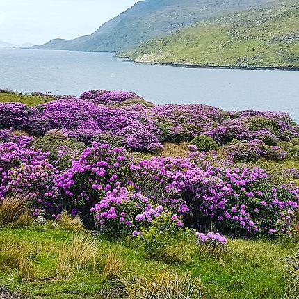 Fjord du Connemara
