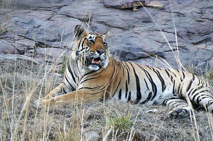 Ranthambore : vous avez dit tigre ?