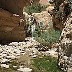 Oasis en plein désert, Ein Guedi
