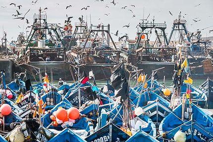 Le port d'Essaouira, Chalutiers et petits bateaux
