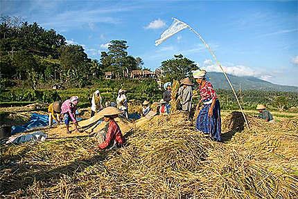 Le travail des champs