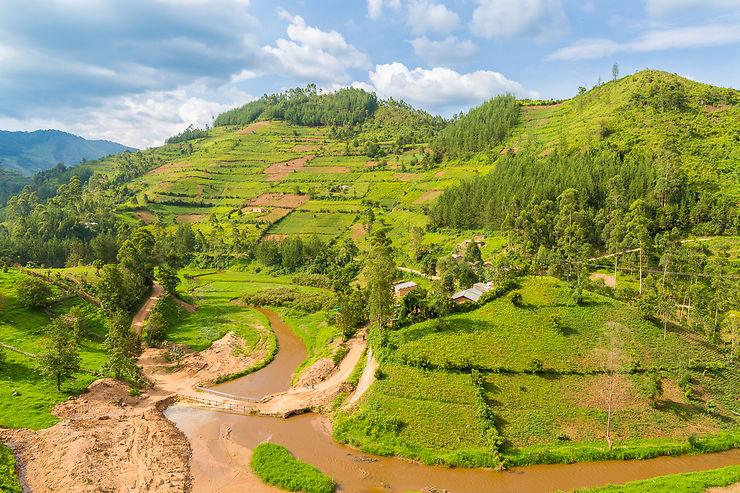 Plantations sur les collines