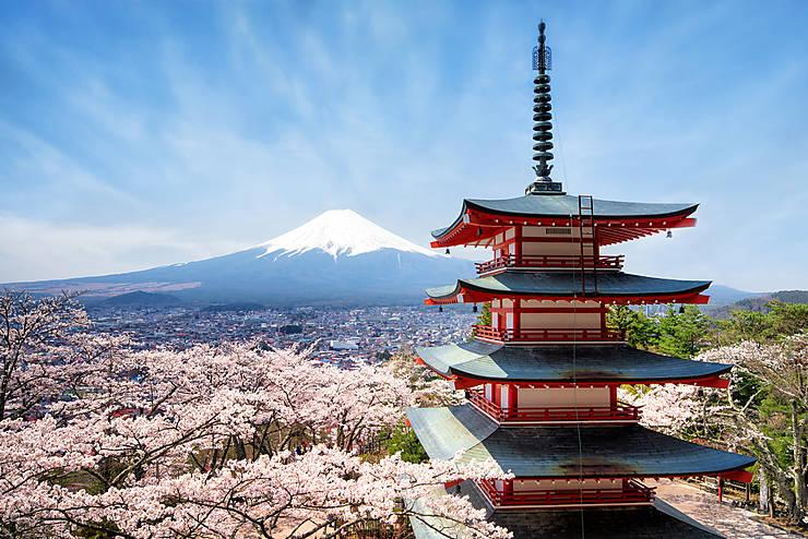 les cerisiers en fleurs du japon - routard