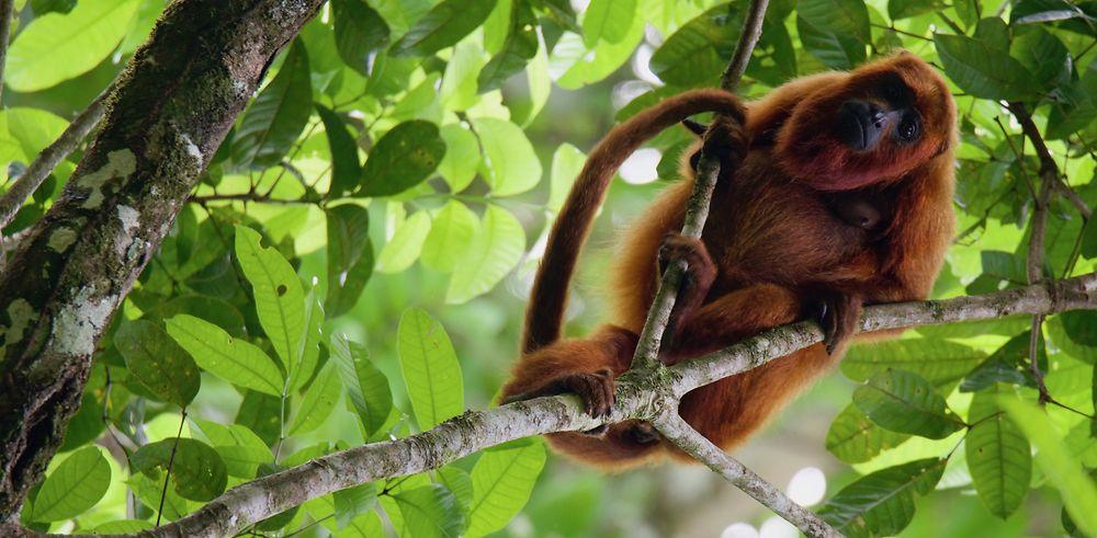 Au cœur de l'océan vert en Guyane