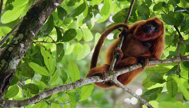 Au cœur de l'océan vert en Guyane fleclerc44