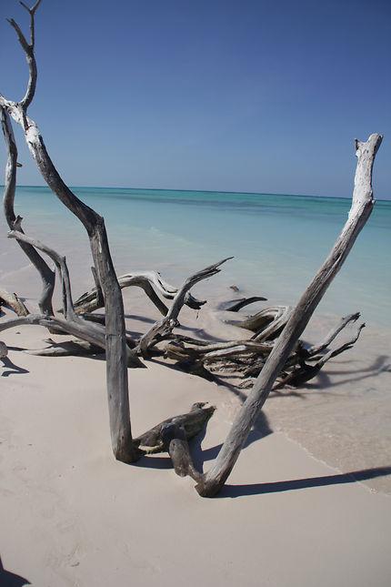 Arbre mort sur la plage