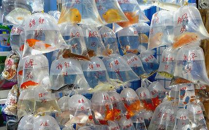 Aquarium de poche