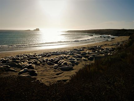 Sea lions Vista Point