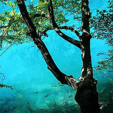 Eaux turquoises de Plitvicka Jezera