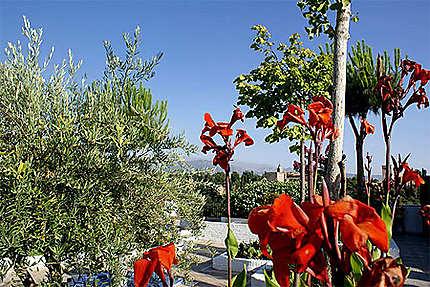 Jardin de la mosquée de L'albaicin