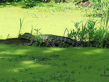 La faune du Lac Martin