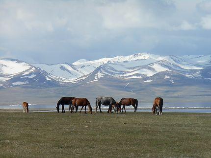 La nature sauvage au Kirghizistan