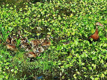 Une petite famille au Lac Martin