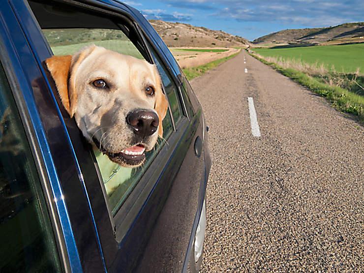 Vacances - 30 Millions d'Amis lance un site pour partir avec son animal