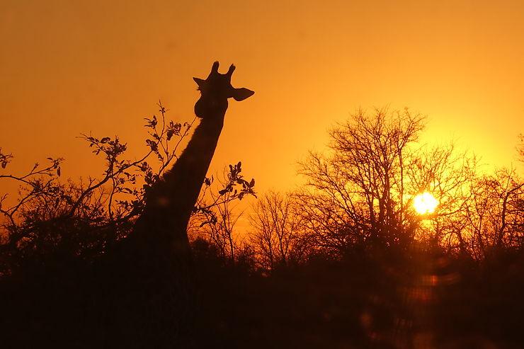 Coucher de soleil au Parc Kruger, Afrique du Sud