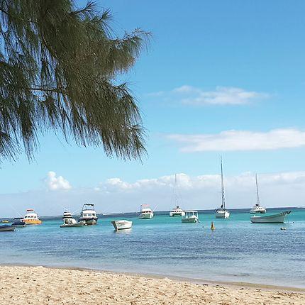 Bain Boeuf à l'Île Maurice