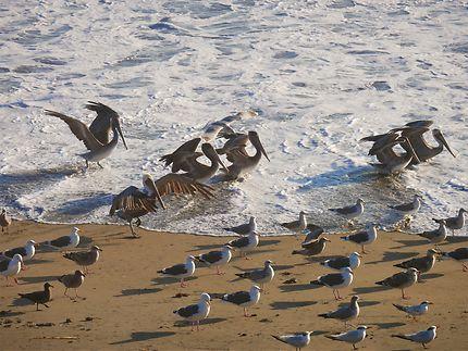 Oiseaux, Vista Point