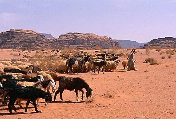 Le Wadi Rum, royaume des bédouins