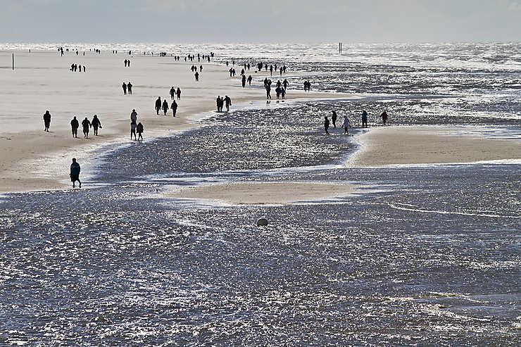 Parc national de la mer des Wadden du Schleswig-Holstein