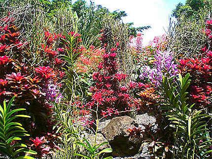 Jardin Botanique Fleurs Jardin Botanique De Deshaies Deshaies