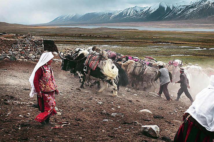 Retour d'une caravane de yaks, Afghanistan