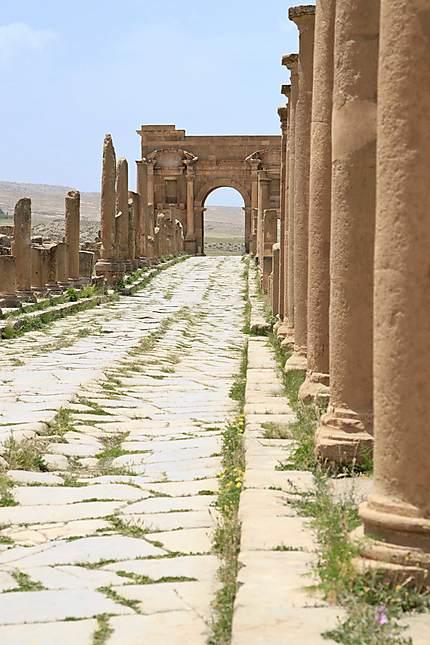Aurès - Timgad - Decumanus maximus vers l'Arc