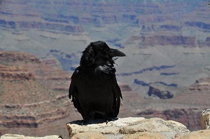 Oiseau au Grand Canyon