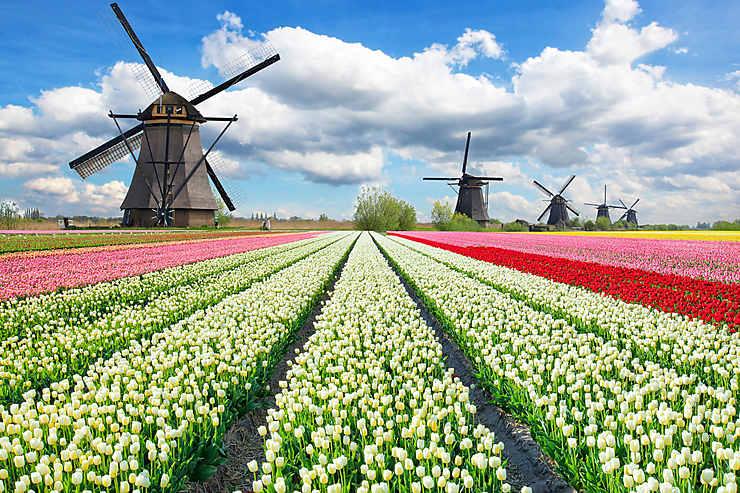 Hollande, au pays des tulipes