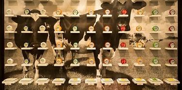 Dégustation de fromages Henri Willig avec vins, bières ou softs à Amsterdam