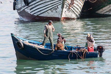 Pêcheurs de retour du large au port d'Essaouira