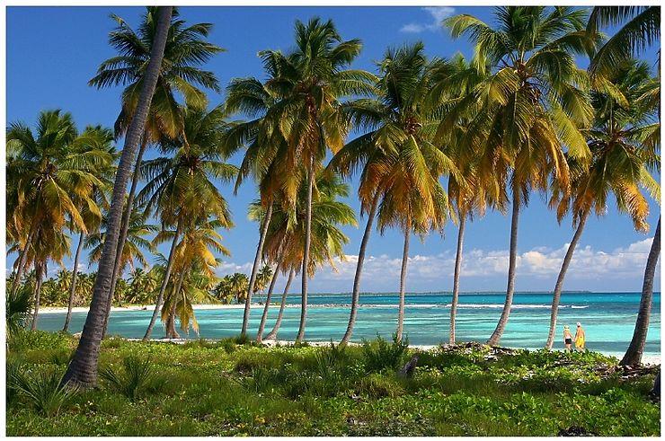 Cocotiers et mer turquoise à Saona, République Dominicaine
