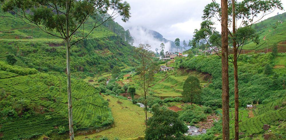 Premier voyage routards en famille au Sri Lanka
