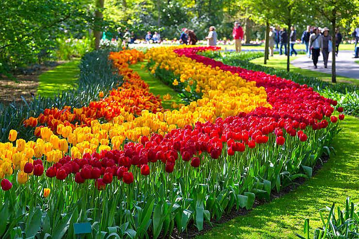 Exposition internationale de fleurs au Keukenhof de Lisse (Pays-Bas)