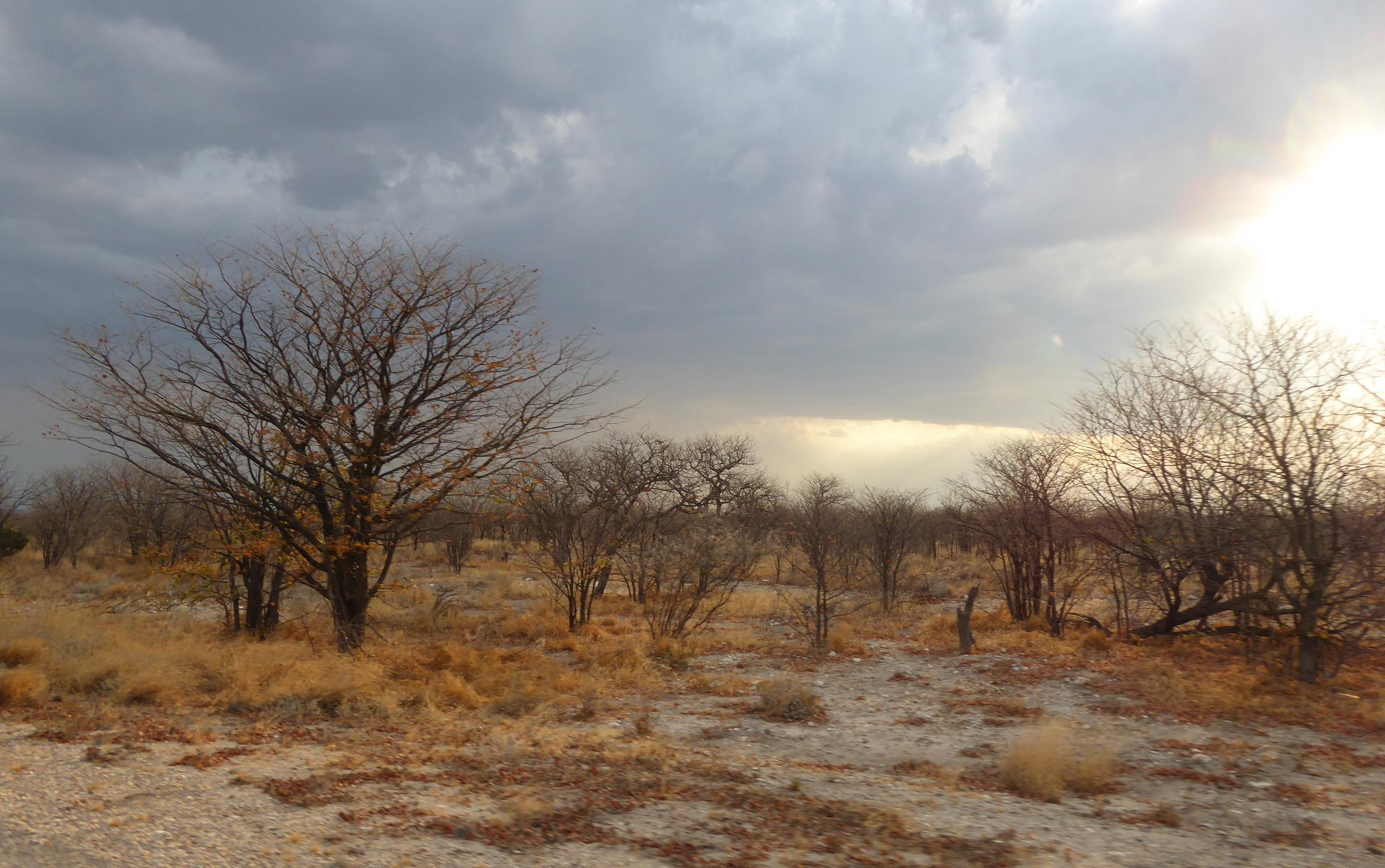 Réserve d'Etosha - Namibie