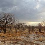 Paysage d'Etosha