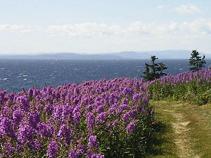 Baie de Gaspé